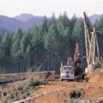 Logging Equipment Appraisal